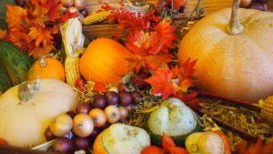 秋野菜で栄養補給