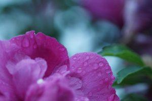 ミステリアスな紫