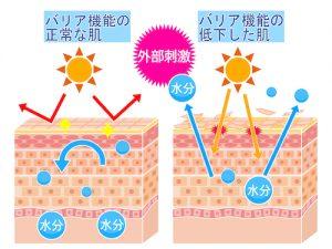 角質層バリアが日焼けを防ぐ