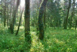 森林浴の効果は絶大
