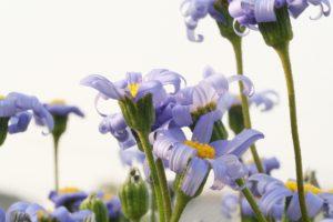 花粉やPM2.5、排気ガスは肌につけない!