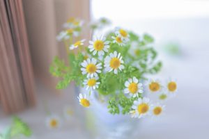 花にも言霊が通じる